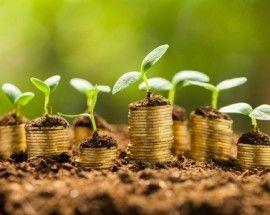 Las 5 W del crecimiento de la empresa